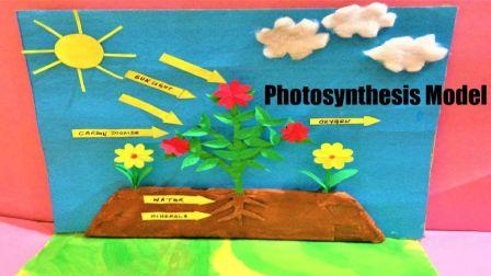 Photosynthesis Model Project for school science exhibition