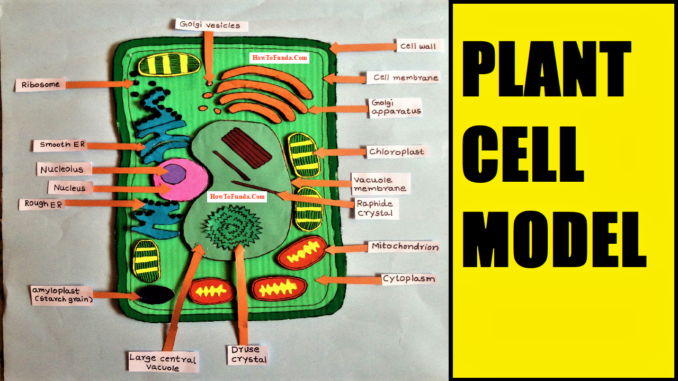 How To Make Plant Cell 3d Model For School Science Exhibition Diy